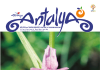 Explore The Hidden Gems Of Antalya With Us: Endemic Plants